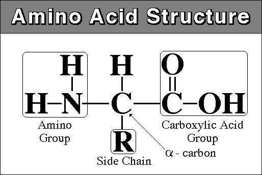 amino_acid_structure_2.jpg